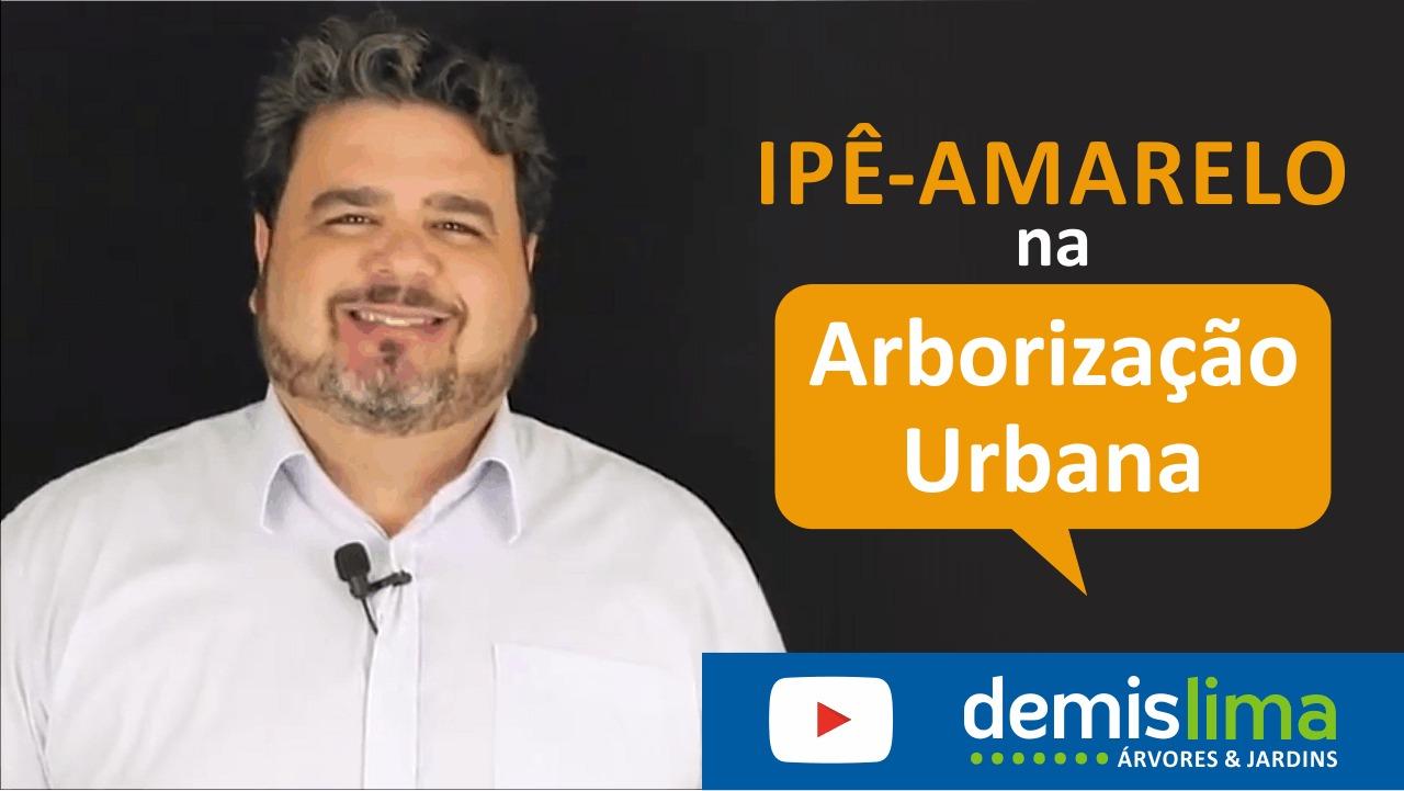 IPÊS AMARELOS ESTÃO EM FLOR